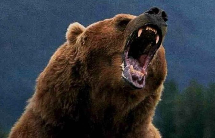 Сила медведя видео