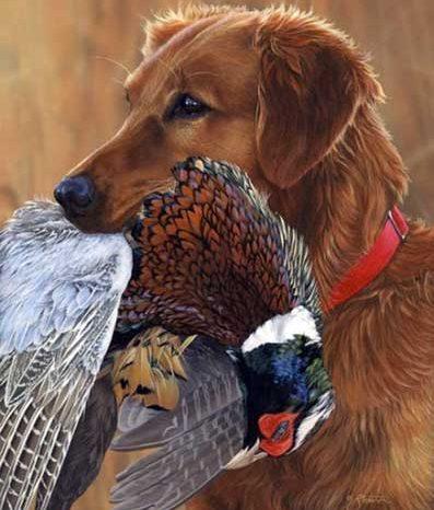 Охота на фазана с собакой и без нее