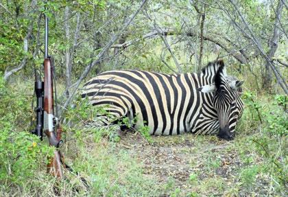 Активный вид отдыха сафари в Африке