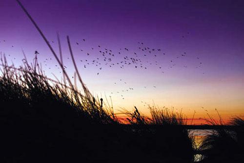 Охота на перелетах - утки
