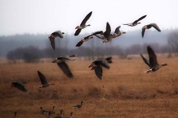 Новосибирская область: все на охоту