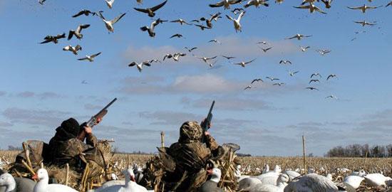 Охота на гуся, способы и тонкости