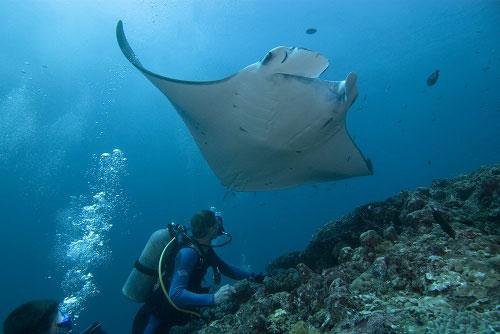 Подводный мир, где погружаться, самые красивые места