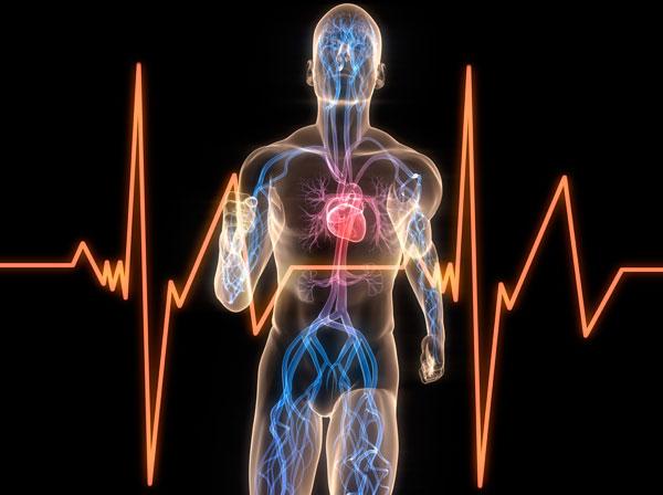 Диагностики работы сердечной мышцы