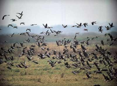 Ружья для охоты на птицу