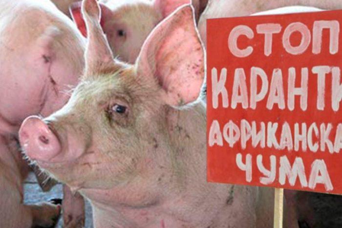 Орловская область: Чума свиней
