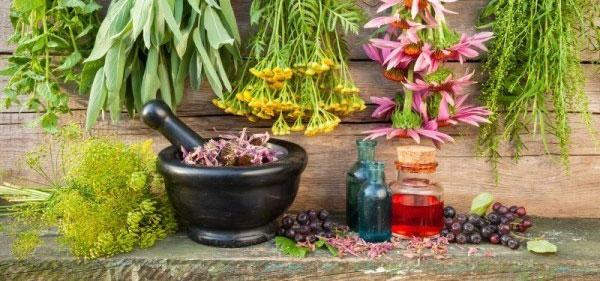Лекарственные растения или лечебные травы - применение в медицине