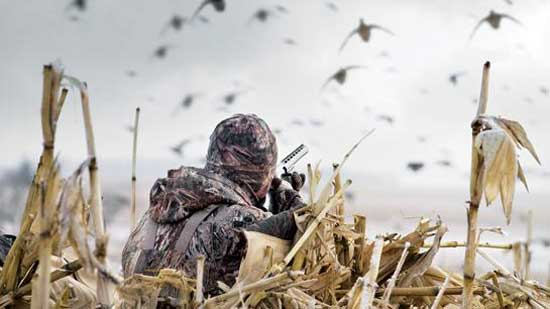 hunting waterfowl