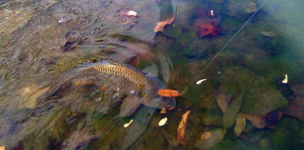 На что ловить рыбу в июне на прудах