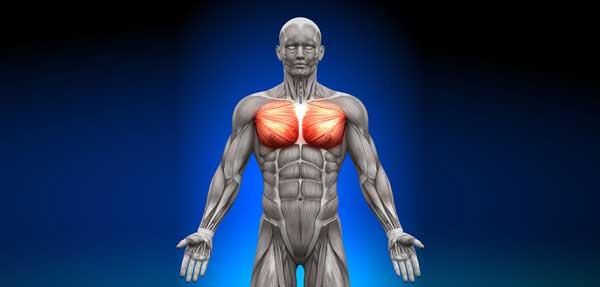 Как накачать грудные мышцы дома, упражнения, видео